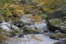 大山の紅葉の画像040
