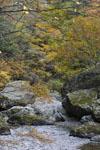 大山の紅葉の画像041