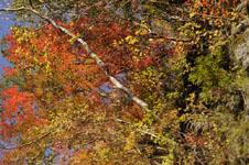 大山の紅葉の画像043
