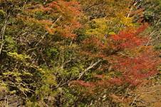 大山の紅葉の画像045