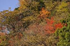 大山の紅葉の画像046