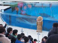 八景島シーパラダイスの水族館の画像001