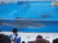 八景島シーパラダイスの水族館の画像002