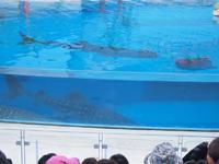 八景島シーパラダイスの水族館の画像003