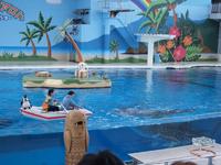 八景島シーパラダイスの水族館の画像006