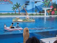 八景島シーパラダイスの水族館の画像007