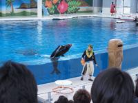 八景島シーパラダイスの水族館の画像009