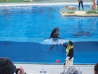 八景島シーパラダイスの水族館の画像010