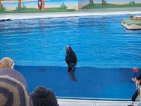八景島シーパラダイスの水族館の画像011