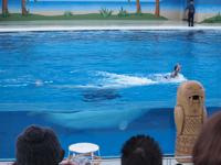 八景島シーパラダイスの水族館の画像013