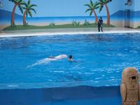八景島シーパラダイスの水族館の画像014