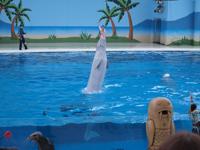 八景島シーパラダイスの水族館の画像015