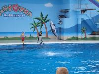 八景島シーパラダイスの水族館の画像021
