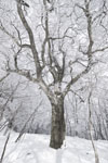 国見山の雪の画像001