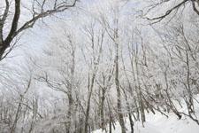 国見山の雪の画像002