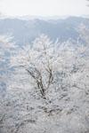 国見山の雪の画像003