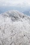 国見山の雪の画像007