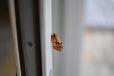 八ヶ岳の蛾の画像001