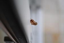 八ヶ岳の蛾の画像002
