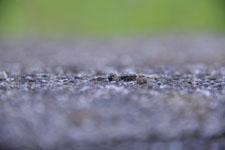 須玉の毛虫