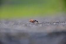 須玉の蟻の画像001