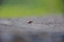 須玉の蟻の画像002