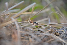 須玉の蟻の画像003