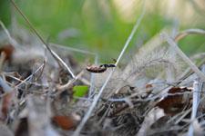 須玉の蟻の画像005