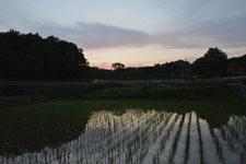 須玉の田んぼの画像001