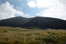 箱根仙石原のススキの画像002