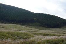 箱根仙石原のススキの画像004