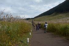 箱根仙石原のススキの画像007