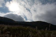 箱根仙石原のススキの画像014