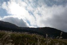 箱根仙石原のススキの画像015
