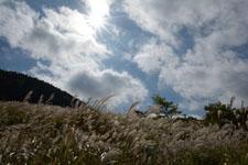 箱根仙石原の太陽の画像005