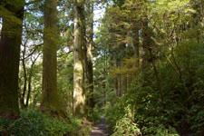 旧東海道の箱根杉並木の画像003