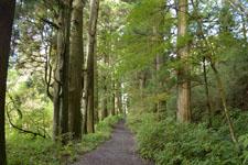 旧東海道の箱根杉並木の画像005