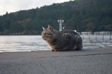 芦ノ湖と猫