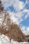 白川郷の雪の画像001