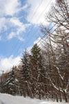白川郷の雪の画像002