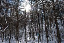 白川郷の雪の画像003