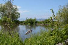 バラードの池のカモの画像001