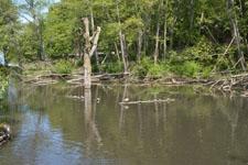 バラードの池のカモの画像003