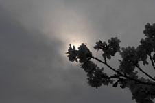 上野恩賜公園の満開の桜の画像049