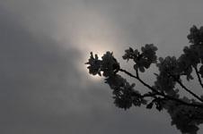 上野恩賜公園の満開の桜の画像050