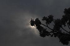 上野恩賜公園の満開の桜の画像053