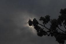 上野恩賜公園の満開の桜の画像054