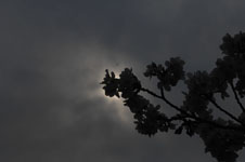 上野恩賜公園の満開の桜の画像055