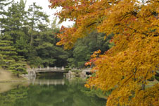 栗林公園の紅葉の画像006