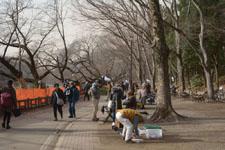 公園の画像003